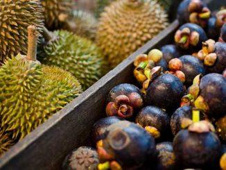 Durian VS mangosteen